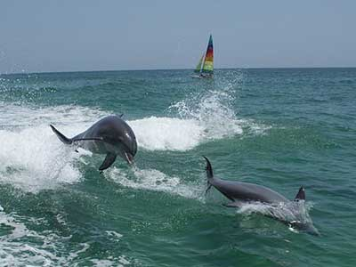 dolphins-1069473  340